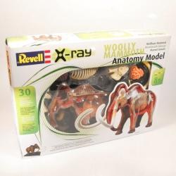 Anatomický model Mamut - REVEL